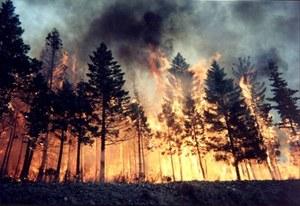 """""""Горячая линия"""" по вопросам, связанным с лесными пожарами!"""
